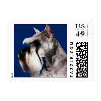 Miniature Schnauzer Head Study Postage Stamp