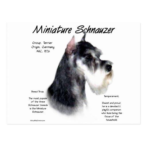 Miniature Schnauzer History Design Postcard