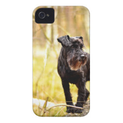 Case-Mate iPhone 4 Barely There Universal Case with Miniature Schnauzer Phone Cases design