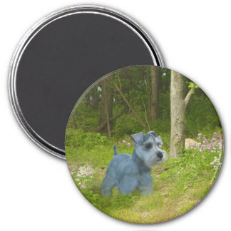 Miniature Schnauzer Magnet