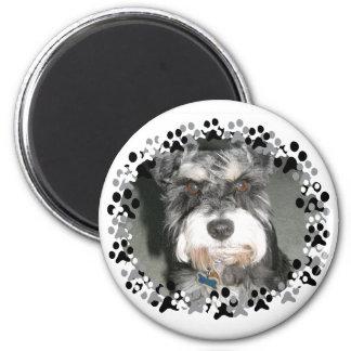 Miniature Schnauzer Photo 2 Inch Round Magnet