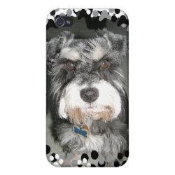 Case Savvy iPhone 4 Matte Finish Case with Miniature Schnauzer Phone Cases design