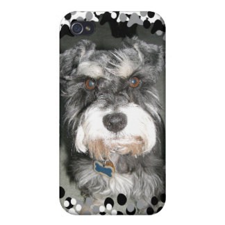 Miniature Schnauzer Photo iPhone 4 Case