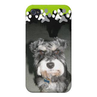 Miniature Schnauzer Photo iPhone 4 Cases