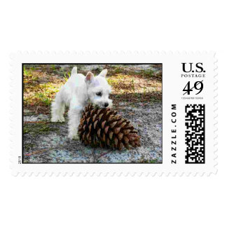 miniature schnauzer postage