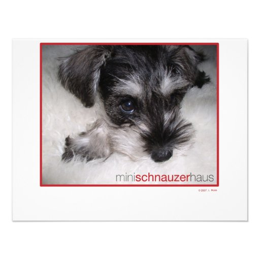 Miniature Schnauzer Pup Invitations