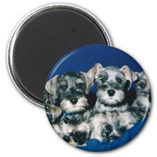 Miniature Schnauzer Puppies 2 Inch Round Magnet