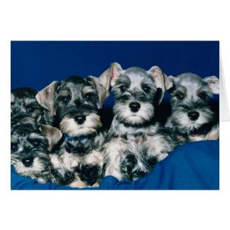 Miniature Schnauzer Puppies Card