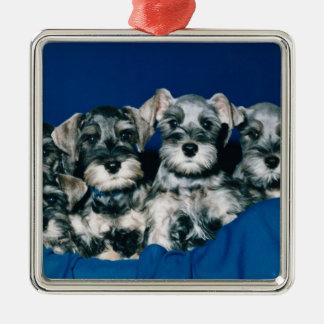 Miniature Schnauzer Puppies Metal Ornament
