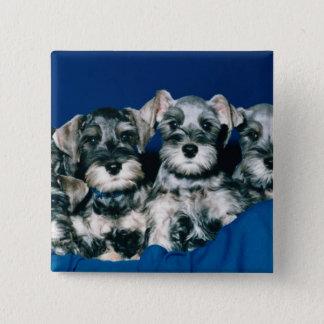 Miniature Schnauzer Puppies Pinback Button