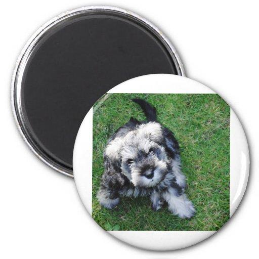 Miniature Schnauzer Puppy 2 Inch Round Magnet