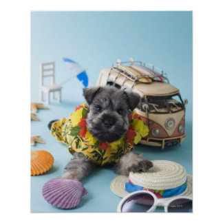 Miniature Schnauzer Puppy and Summer Vacation Poster