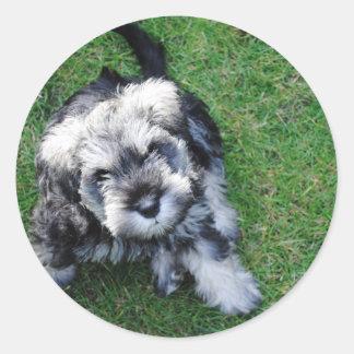 Miniature Schnauzer Puppy Classic Round Sticker