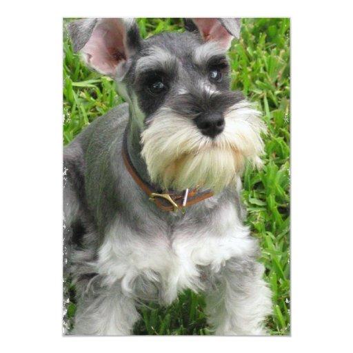 Miniature Schnauzer Puppy Dog Invitation