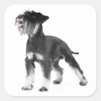 Miniature Schnauzer Puppy Dog Label Sticker