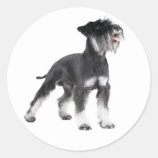 Miniature Schnauzer Puppy Dog Sticker