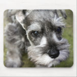 """Miniature Schnauzer Puppy Mousepad<br><div class=""""desc"""">Heracles &quot;Harry&quot; the miniature schnauzer puppy is too cute to ignore.  Sure to perk up any office or computer desk</div>"""