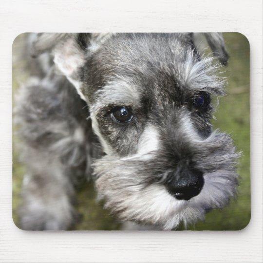 Miniature Schnauzer Puppy Mousepad