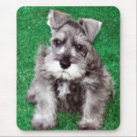 "Miniature Schnauzer Puppy Mousepad<br><div class=""desc"">Heracles &quot;Harry&quot; the miniature schnauzer puppy is ready to brighten up your office and with a face like that how can you say no?</div>"