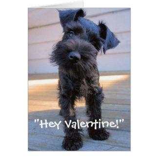 Miniature Schnauzer Valentine's Day Card