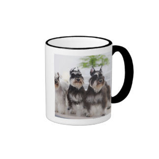 Miniature Schnauzers standing at edge of table Ringer Mug