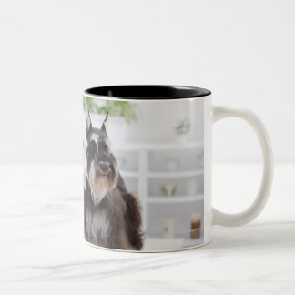 Miniature Schnauzers standing at edge of table Two-Tone Coffee Mug