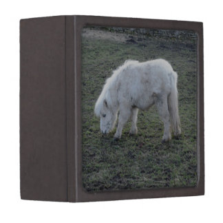 Miniature White Horse Gifts Jewelry Box