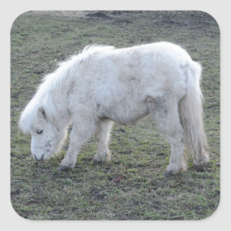 Miniature White Horse Gifts Square Sticker