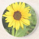 Miniature Wild Sunflower Bloom Coaster
