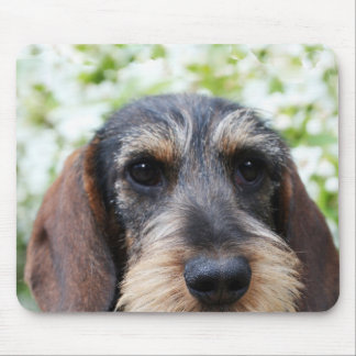 Miniature Wire Haired Dachshund Mouse Pad