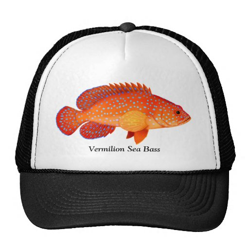 Miniatus Grouper Vermilion Sea Bass Hat