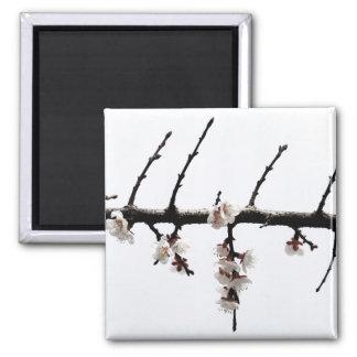 Minimalist Cherry Blossoms 2 Inch Square Magnet