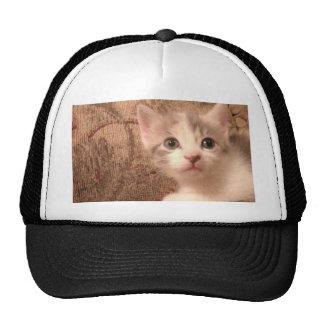 Minino del vintage gorras
