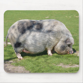 Minipig on grass mouse pad