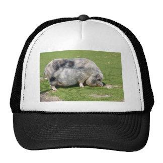 Minipig on grass trucker hat