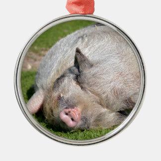 Minipig sleeping on grass metal ornament
