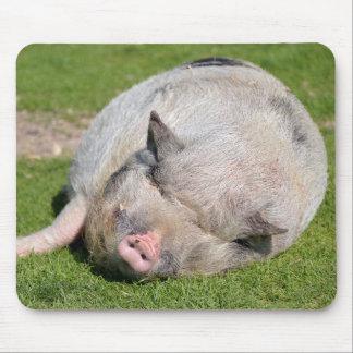 Minipig sleeping on grass mouse pad
