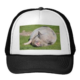 Minipig sleeping on grass trucker hat