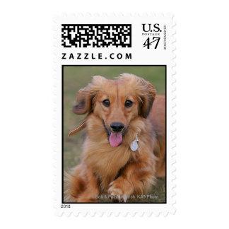 Miniture Dachshund Running Postage Stamp
