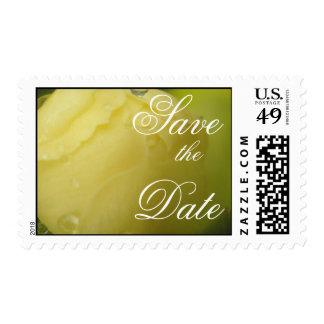 Miniture Rosebud Postage Stamp