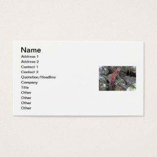 Mink Photo Business Card