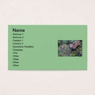 Mink Photo Closeup Business Card