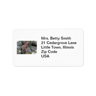 Mink Photo Address Label