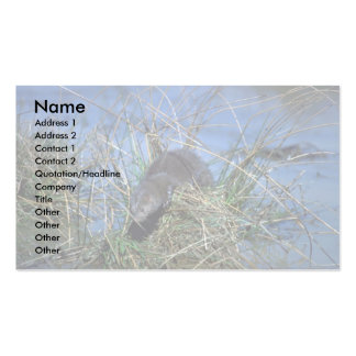 Mink resting on grassy tussock in marsh business card templates