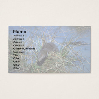 Mink resting on grassy tussock in marsh business card