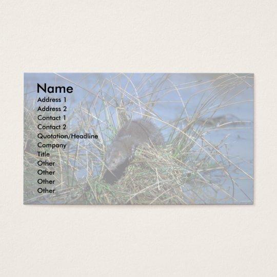 Mink resting on grassy tussock in marsh business card