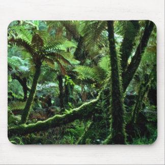 Minnehaha Walk, The Fox Rain Forest Mousepad