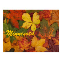 Minnesota Autumn Leaves Postcard