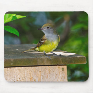 Minnesota, Mendota Heights, Great-crested Mouse Pad