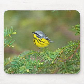 Minnesota, Mendota Heights, Magnolia Warbler 1 Mouse Pad